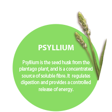 PSYLLIUM. Psyllium is the seed husk from the plantago plant, and is a concentrated source of soluble fibre. It regulates digestion and provides a controlled release of energy.