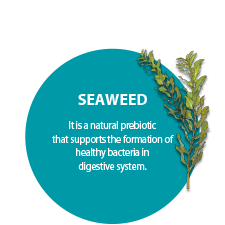 SEAWEED. It is a natural prebiotic that supports the formation of healthy bacteria in digestive system.