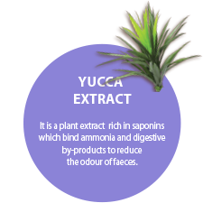 YUCCA EXTRACT. It is a plant extract  rich in saponins  which bind ammonia and digestive by-products to reduce the odour of faeces.